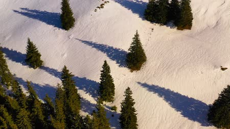 Green forest and snowy mountains, aerial winter scene in Romanian Carpathians.