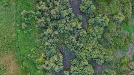 commencement : Shooting of the forest and river from air. Aerial Shooting of green fields Stock Footage
