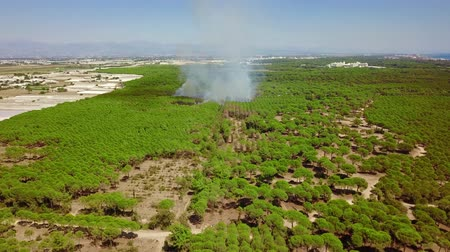 A fire in an open area in the garden in the desert