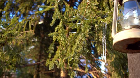 níveis : icicle on a spruce branch next to the lantern.