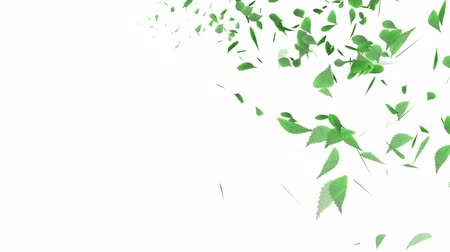 зеленый фон : Whirling Green Leaf - White background Стоковые видеозаписи