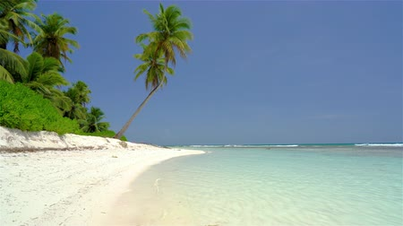 saona : Beautiful ocean beach in dominican republic at sunny morning Stock Footage