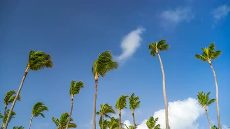 dominican : Timelapse of clouds in a blue sky over palm trees in dominican republic at sunny day