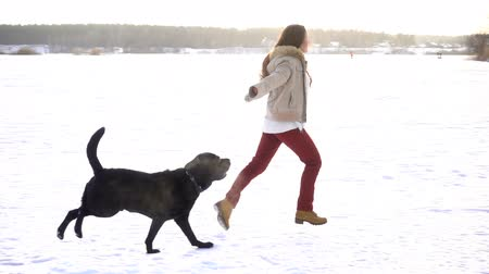 domestic short haired : black labrador running with young girl on snow field