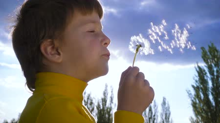pampeliška : Silhouette of Little boy blowing up the dandelion
