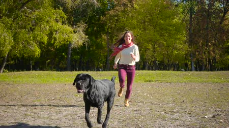 domestic short haired : girl running with black labrador dog at autumn park