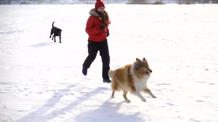 çevik : girl running with dogs on winter snow field Stok Video