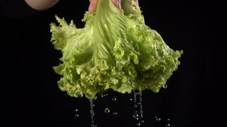 falling drops of water while shaking off a leaf of salad