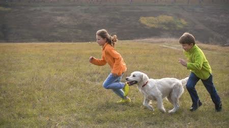 corrida : Two kids running with golden retriever at field Vídeos
