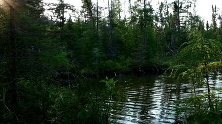 yemyeşil bitki örtüsü : Establishing shot of serene remote lake in forest of northern Minnesota near Bemidji with natural sunbeams