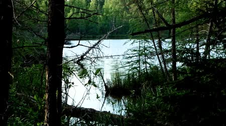 pristine : Establishing shot of serene remote lake in forest of northern Minnesota near Bemidji Stock Footage