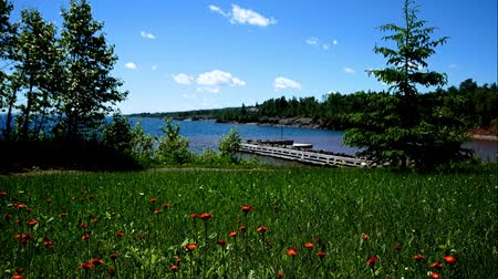 superior : Beautiful wild flowers growing near the north shore of Lake Superior in Minnesota on a sunny day.