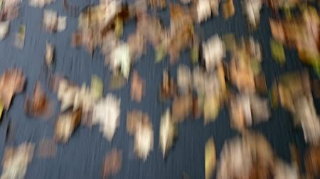Close up of asphalt road with autumn leaves, driving abstract