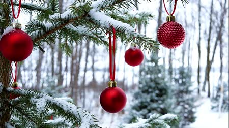 Close-up of red Christmas Baubles Balls hanging on snow covered tree branches outside. This footage was taken at Bemidji, Minnesota, USA with Lake Irving in background.