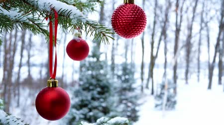Close-up of red Christmas Baubles Balls hanging on snow covered pine tree branches outside. This footage was taken at Bemidji, Minnesota, USA with Lake Irving in background. Wideo