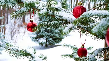Close-up of red Christmas Baubles Balls hanging on snow covered pine tree branches outside with subtle zoom out. Footage recorded at Bemidji, Minnesota, USA with Lake Irving in background. Stock mozgókép