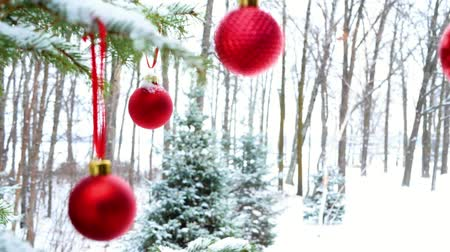 Close-up of red Christmas Baubles Balls hanging on snow covered pine tree branches outside with focus shift, slight zoom, and bird flying away. Footage recorded at Bemidji, Minnesota, USA with Lake Irving in background. Стоковые видеозаписи