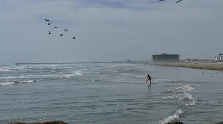 PORT ARANSAS, TX - 28 FEB 2017: Girl has fun riding waves into shore while adults are walking on the beach and pelicans fly over.