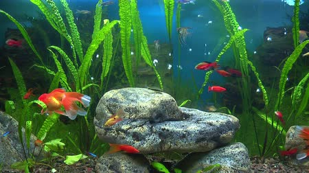 bright bubble : Aquarium with goldfish