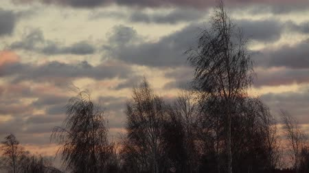 The wind blows on a tree branch at sunset. Stock Footage