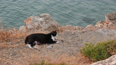 zbloudilý : A group of stray cats with blue sea, Spain.