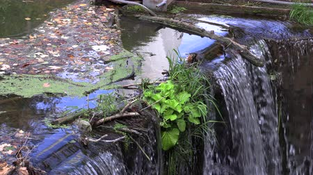 stagnant : Garbage gathered at the river crossing, neckar Stock Footage