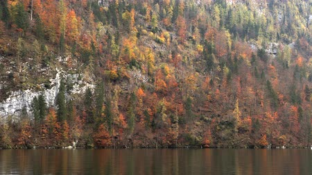 finlandês : Autumn forest on the lake, slow motion, germany