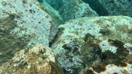 keskin : sea urchins and fish, corals at the bottom of the Mediterranean Sea Stok Video