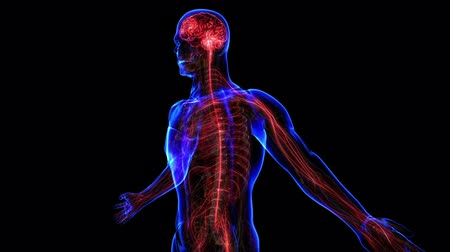 gergin : All human body systems. Transition body - nervous system - body. Loop Stok Video