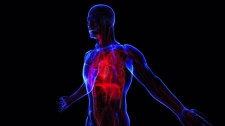 respiratory : All human body systems. Transition body - respiratory system - body. Loop Stock Footage