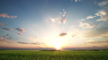 сумерки : Sunset over big field