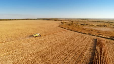 мучной : Aerial shot: Combine harvesting on cornfield