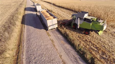 trigo sarraceno : Aerial shot: Combine harvesting on cornfield