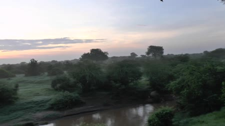 realizing : Safari Kenya dawn Stock Footage