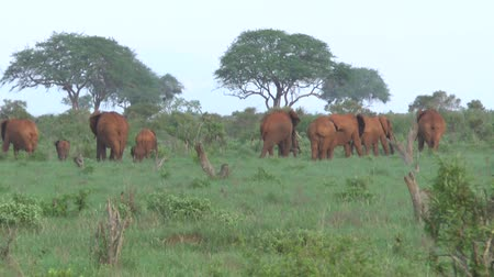 realizing : Safari Kenya elephant herd