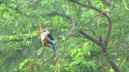 realizing : Safari Kenya Kingfisher