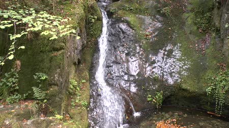 seebach : Noble grave waterfalls in the Black Forest Stock Footage