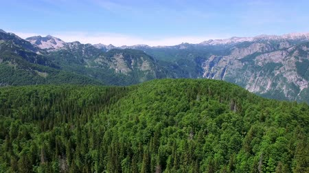 AERIAL VIEW: flight over alpian forest around Bohinj lake , camera moving forvards .Triglav National Park Stock mozgókép
