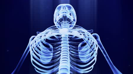 技术 : x ray skeleton looping animation