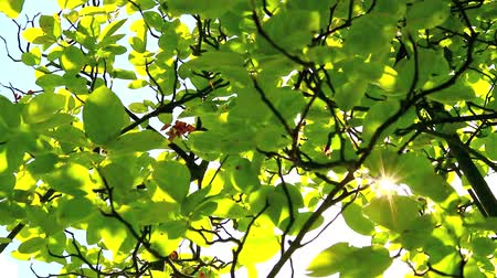 listki : Sunlight through green leaves Wideo