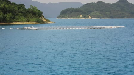 hong kong : Solar panels on water at  Plover Cove Reservoir
