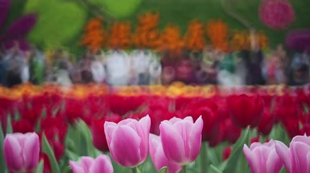 Colorful Tulip Field Stock Footage