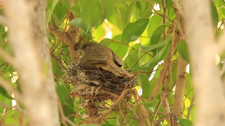 csaj : baby birds waiting