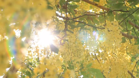 át : Sunshine through trees
