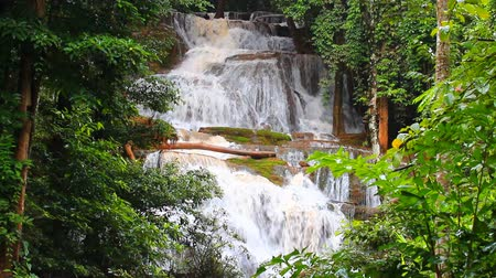 floresta tropical : waterfall