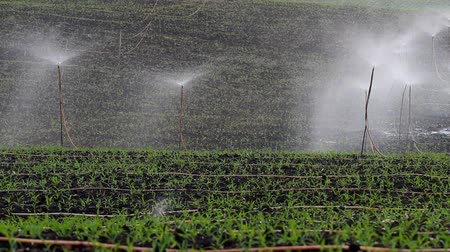 farm equipment : farm sprinkler  Stock Footage