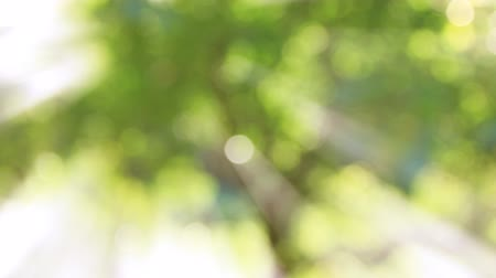 pan : nature green bokeh with ray.