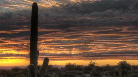 kaktusz : HDR Timelapse Arizona Cactus at sunset while dark and red clouds passing by Stock mozgókép