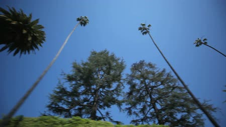 бульвар : Driving through Palm Trees in Beverly HillsLos Angeles