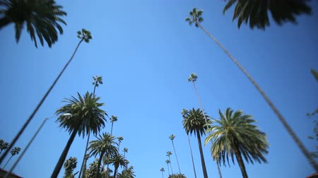 tourism : Driving through Palm Trees in Beverly HillsLos Angeles